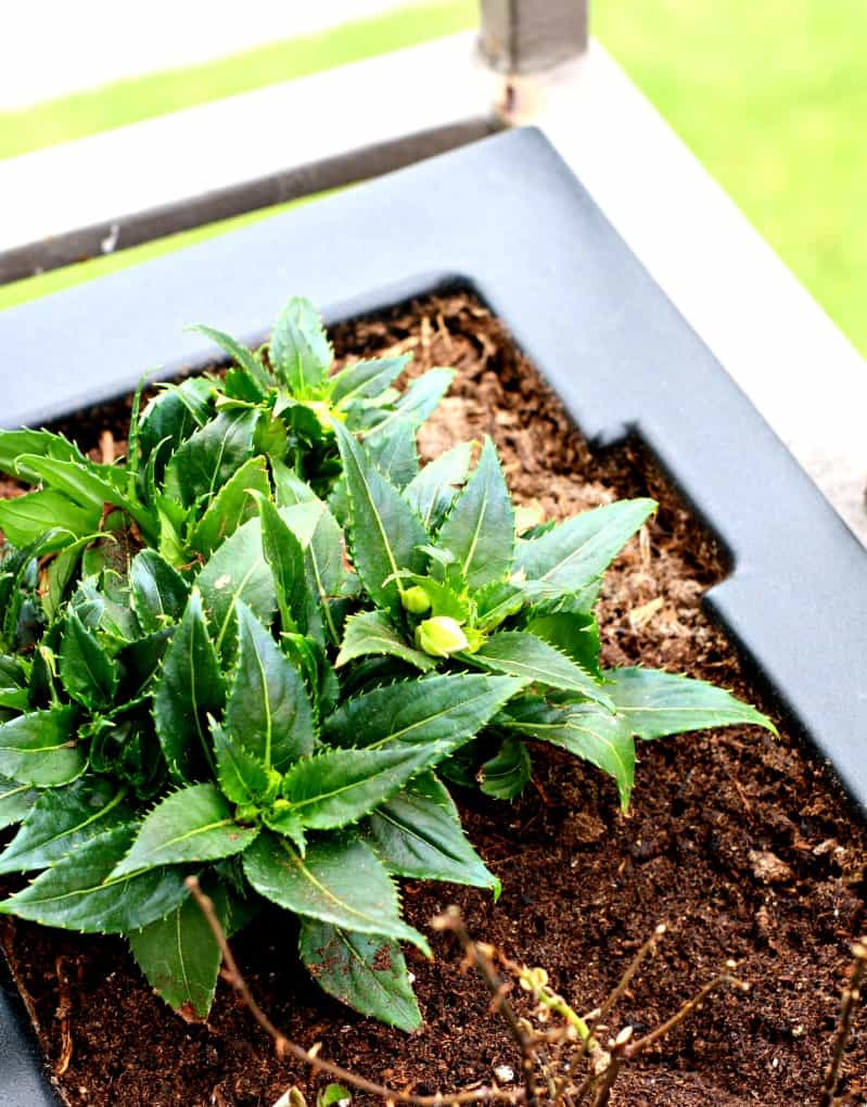 black container with green plant in soil