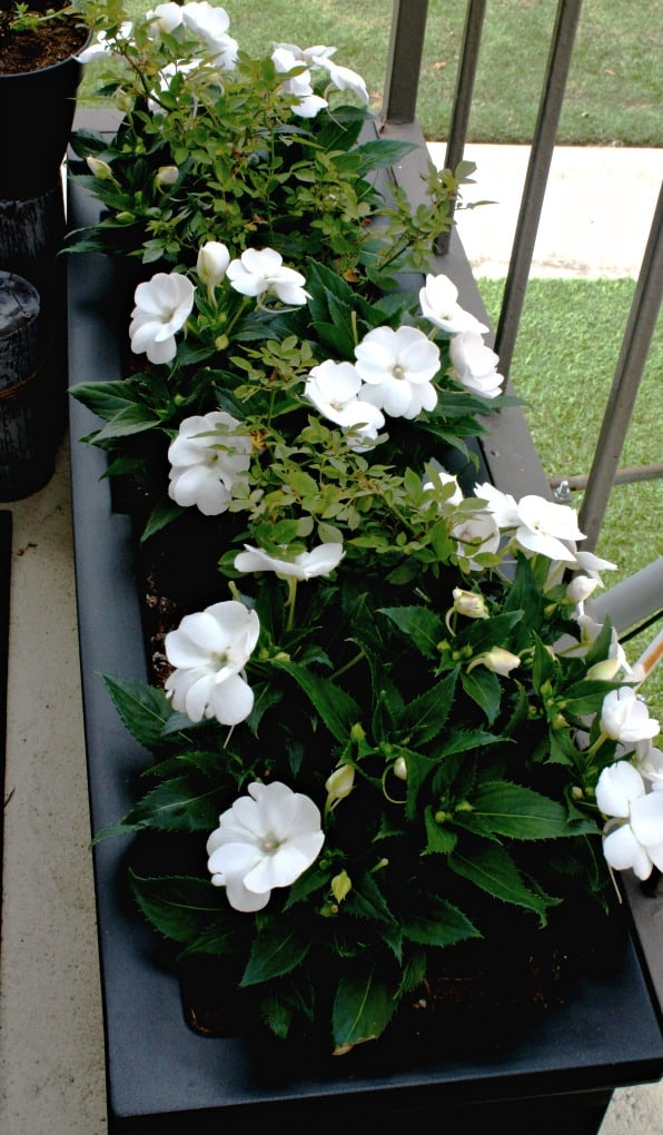 black window box with white flowers and greenery on patio floor