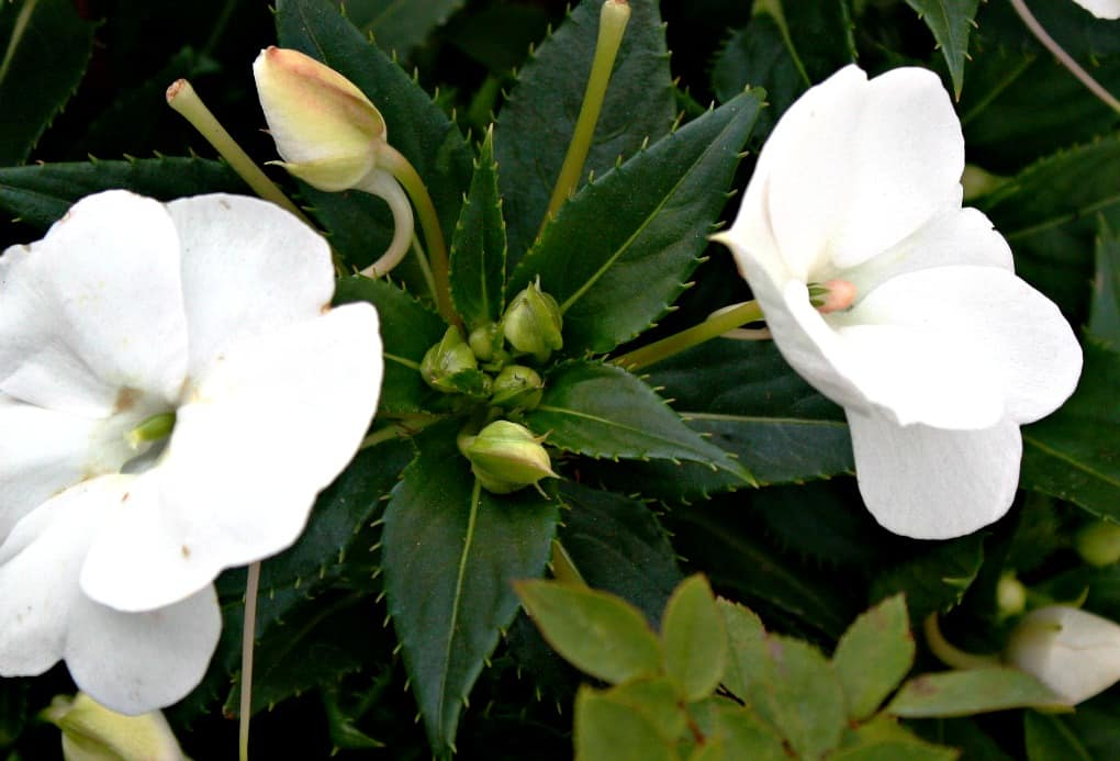 White flowers with greenery and buds