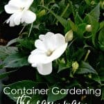 3 easy steps to create a container garden white flowers with greenery