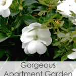 White flowers with greenery and buds title apartment gardening in 3 easy steps
