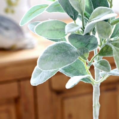 How to Make a Topiary Tree with Lamb's Ear