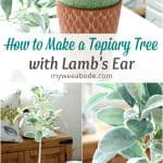three photos of various stages of making a topiary tree with lambs ear