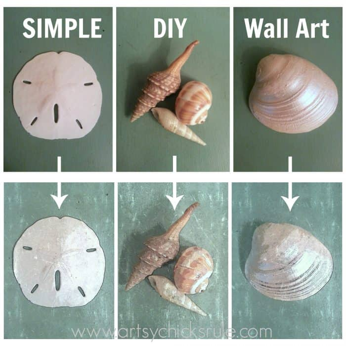 shell photos and shell water colors pictures