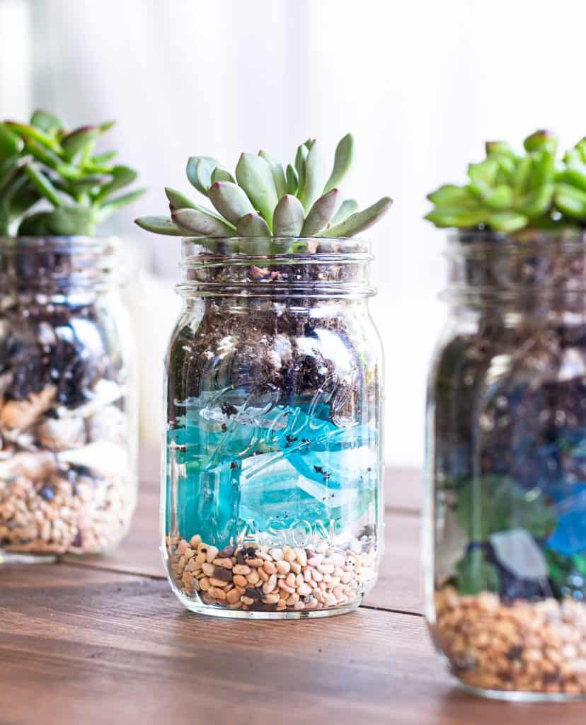 tuesday turn about 9 mason jars with succulent plants