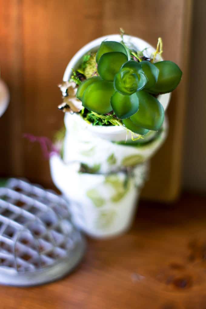 mini pots with succulent