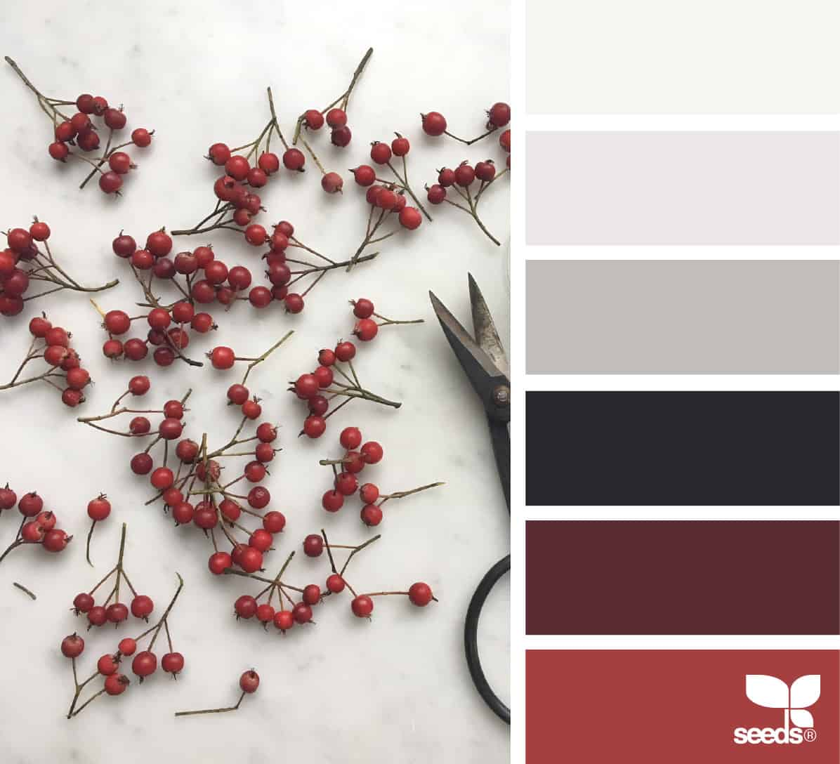 berries and clippers on white surface with color palette