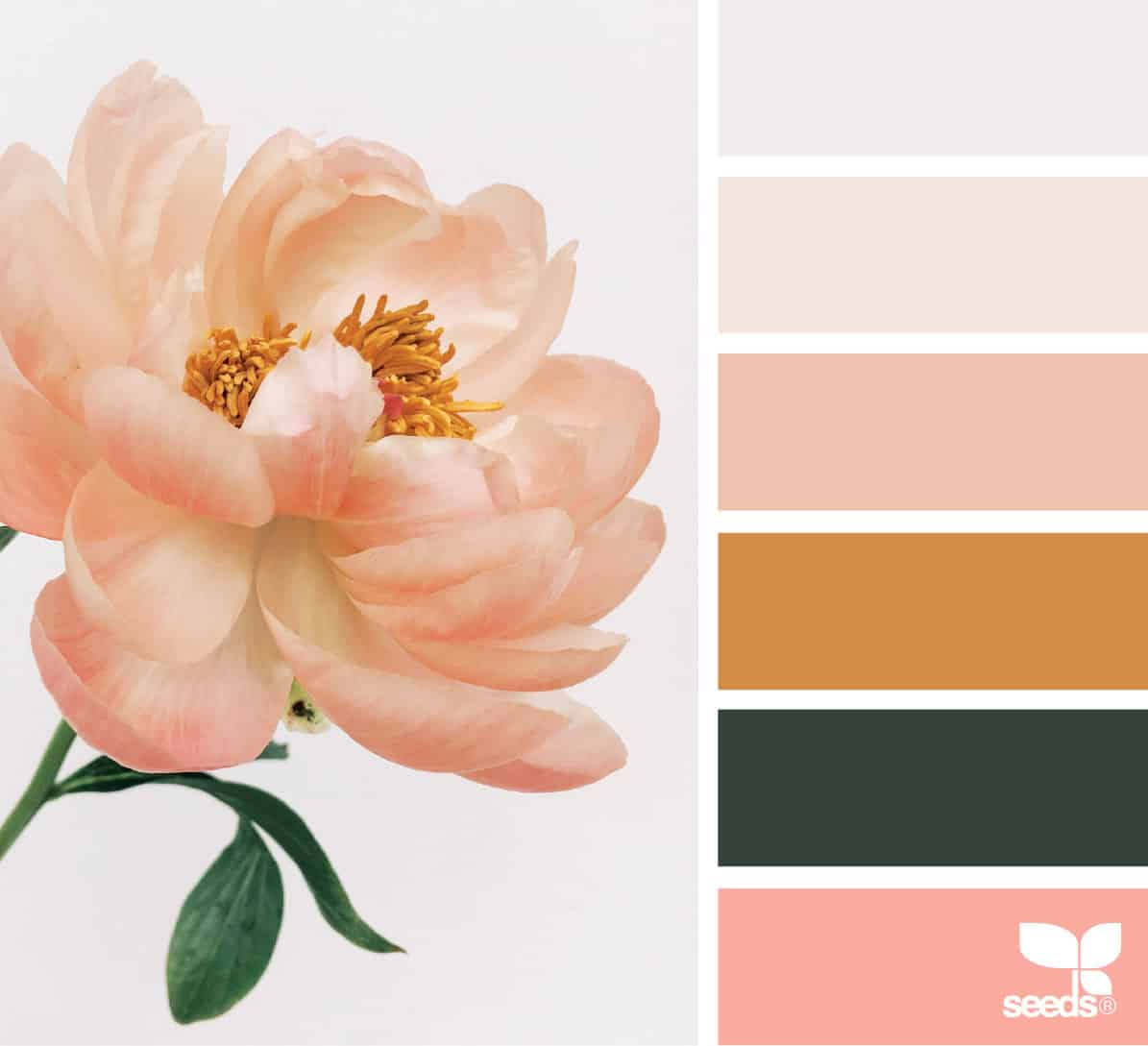 bathroom color schemes rose and palette