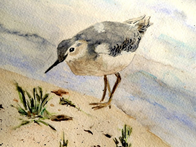 tuesday turn about 70 october discoveries painting of a sandpiper on a beach