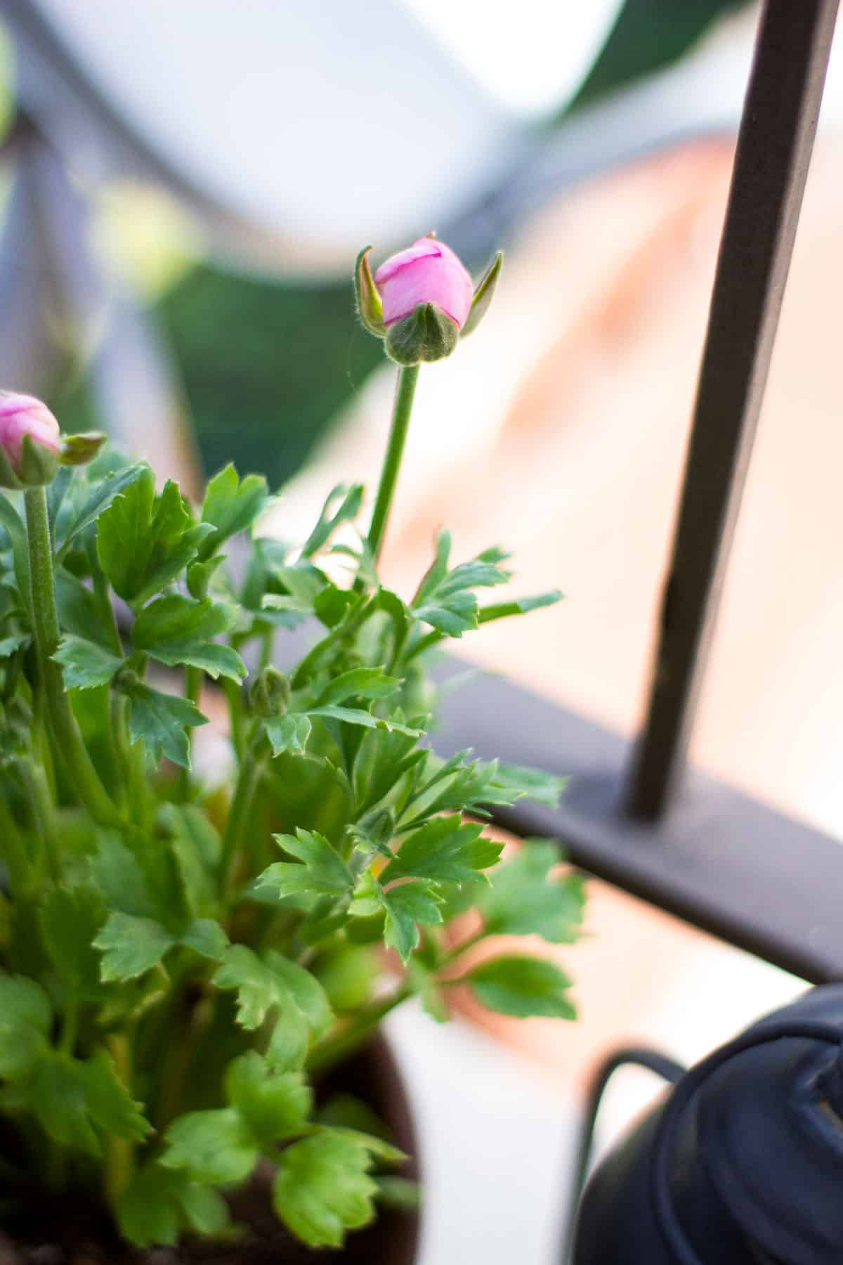 how to add spring time flowers to a tiny patio pink bud with greenery