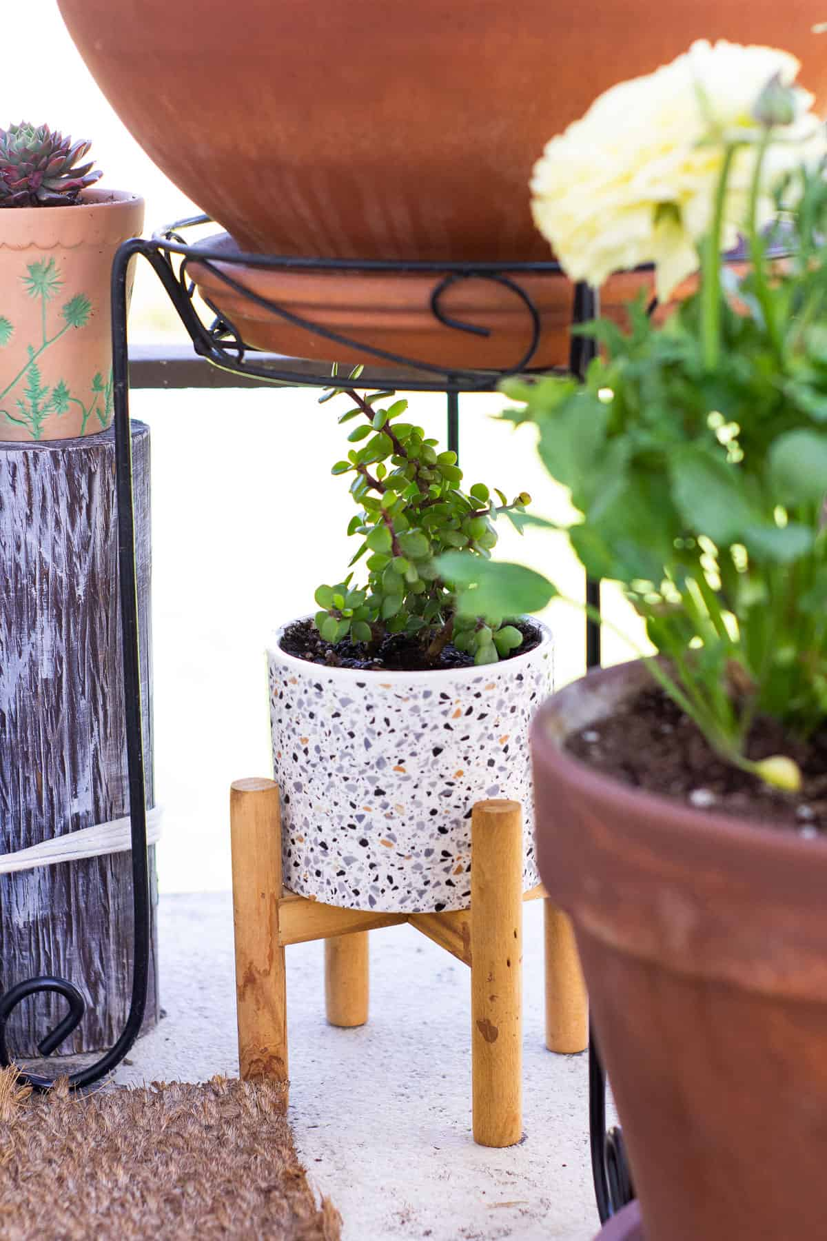 how to add spring time flowers to a tiny patio succulent in a terrazzo pot and stand