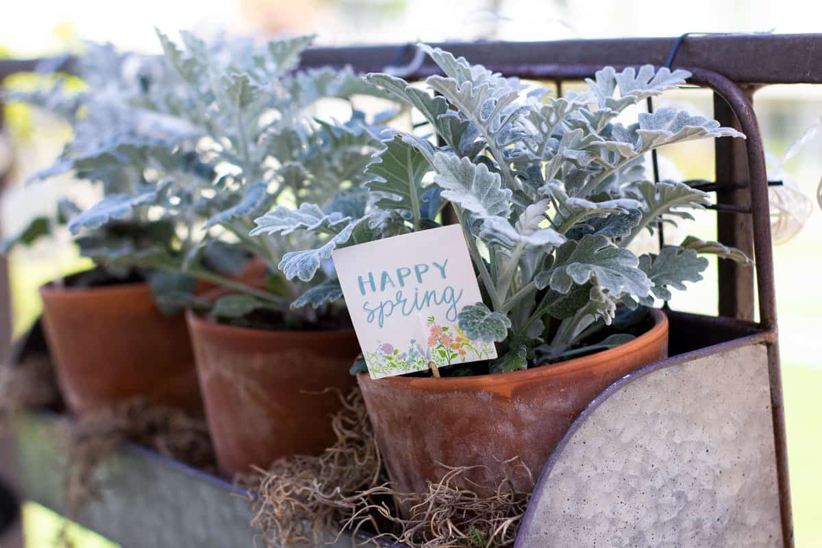 how to add spring time flowers to a tiny patio terra cotta pots with dusty miller and spring time sign