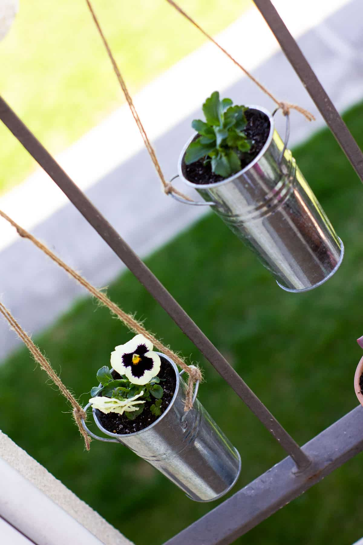 galvanized hanging pots with plants