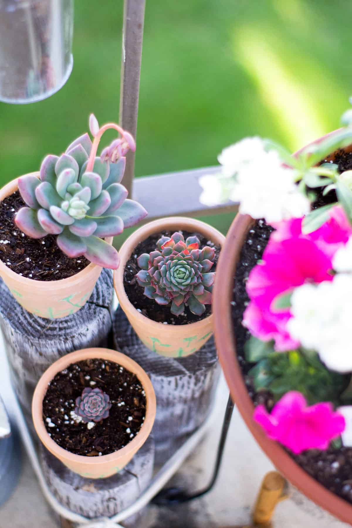how to add spring time flowers to a tiny patio terra cotta pots with succulents on wood pilings
