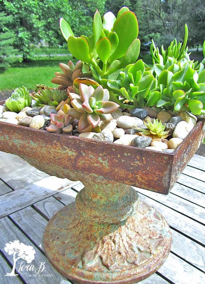 succulent garden in vintage vessel on wood table