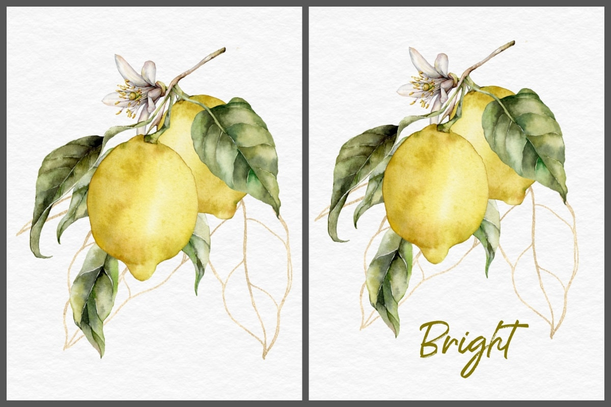 lemon branch with blossoms collage