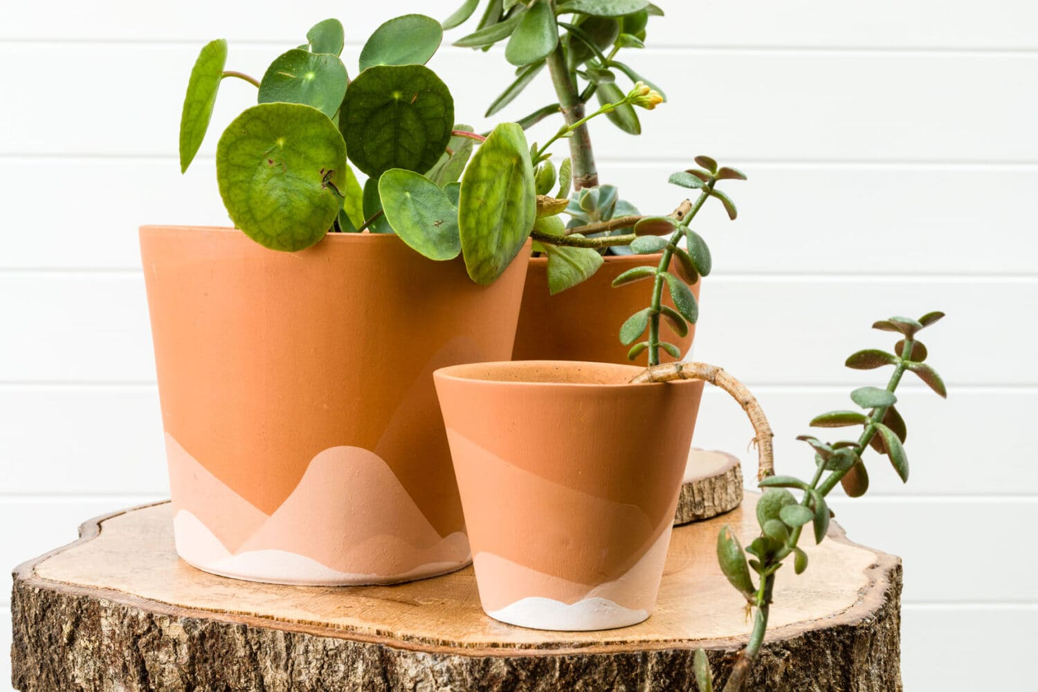 tuesday turn about fall beginnings painted terra cotta pots with plants